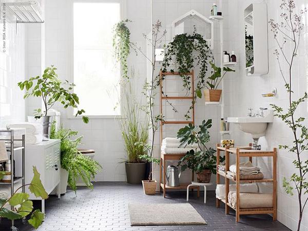 Cây dương xỉ trồng trong nhà tắm