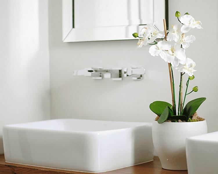 Cây lan ý dễ chăm sóc thích hợp trồng trong nhà vệ sinh, nhà tắm