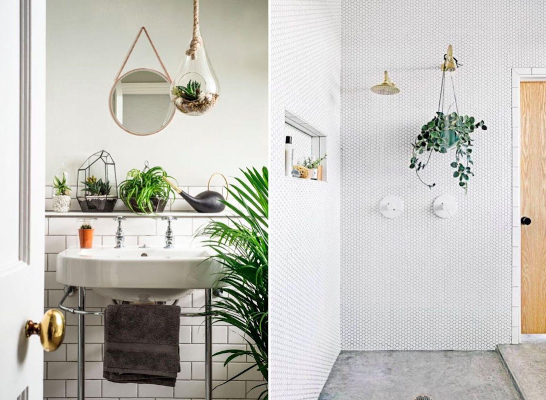 cây trồng trong nhà vệ sinh cây dây nhện hút khí độc