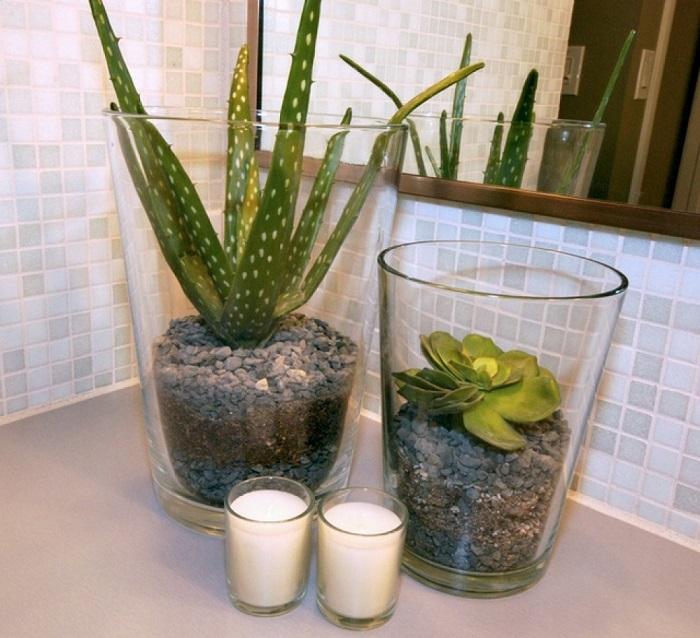 cây lô hội cây trồng trong nhà vệ sinh